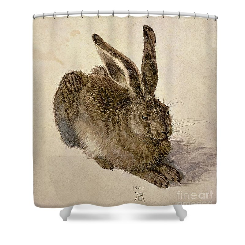 Hare Shower Curtain featuring the painting Hare by Albrecht Durer