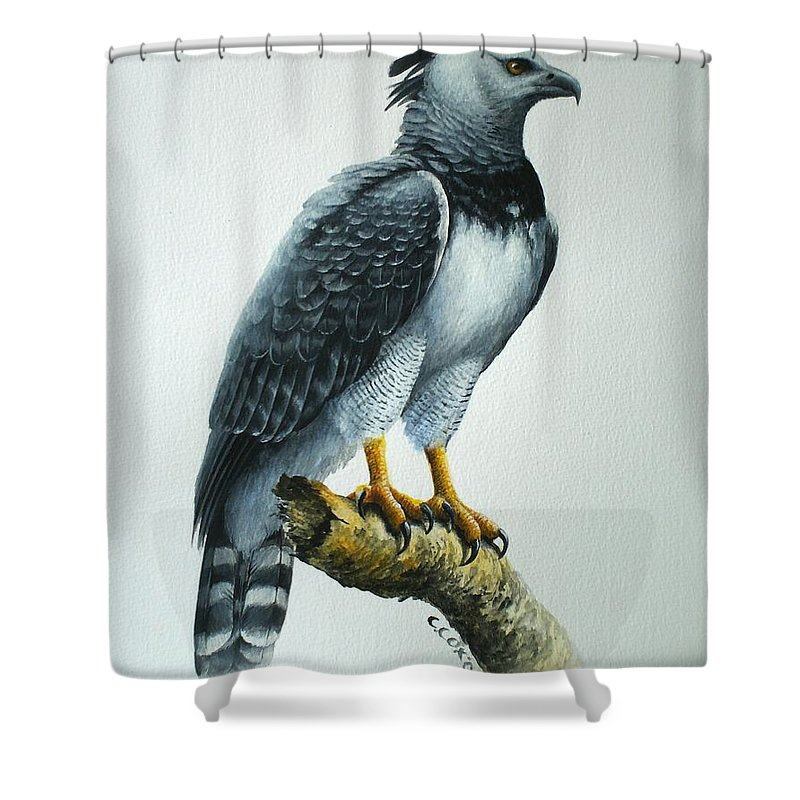 Harpy Eagle Shower Curtain featuring the painting Harpy Eagle by Christopher Cox