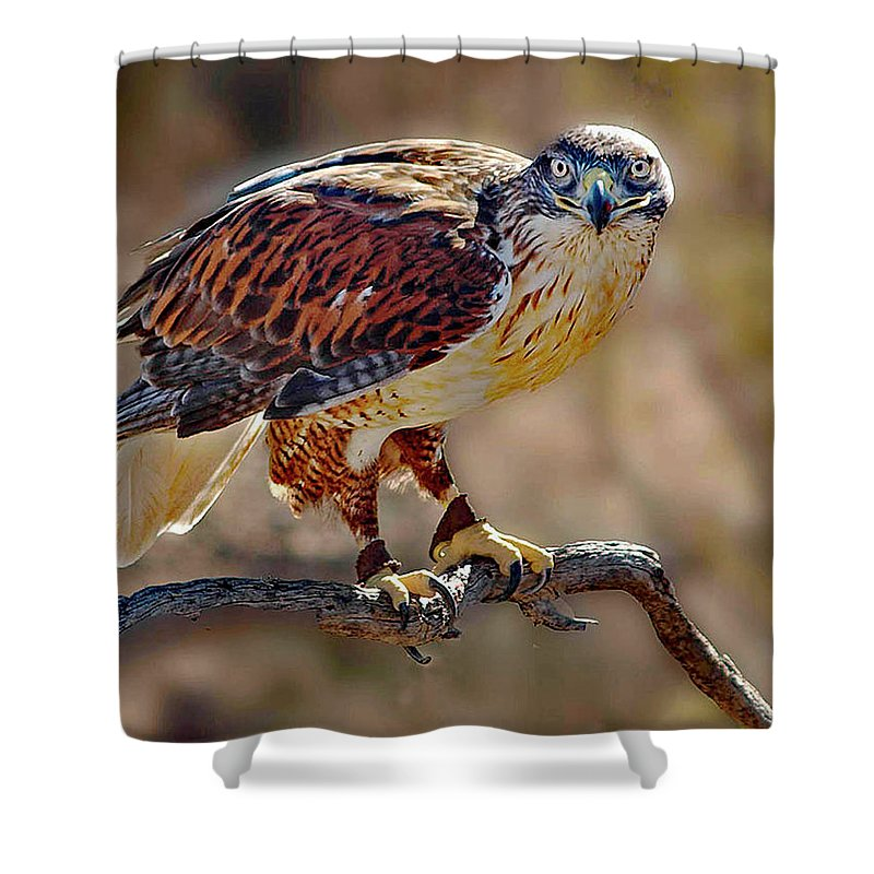 Bird Shower Curtain featuring the photograph Harris Hawk by John Beamer