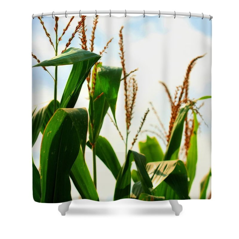 Farm Shower Curtain featuring the photograph Harvest Corn Stalks by Angela Rath