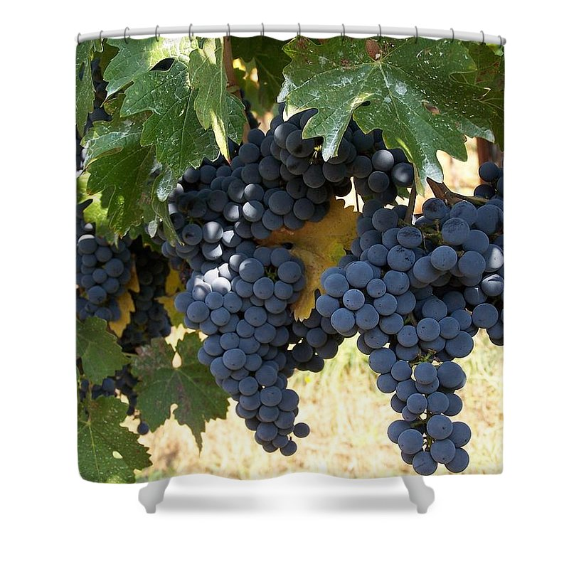 Grapes Shower Curtain featuring the photograph Harvest Time by Gale Cochran-Smith