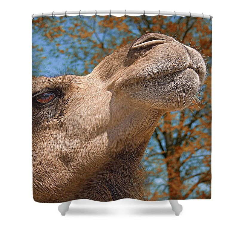 Camel Shower Curtain Featuring The Photograph Haughty By Mitch Spence