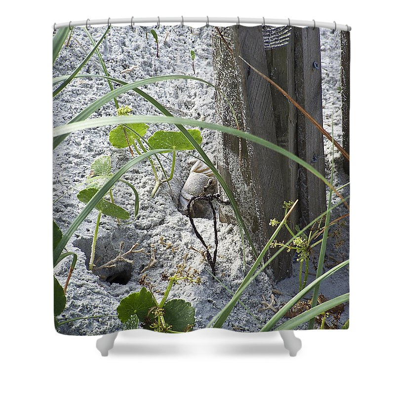 Crab Shower Curtain featuring the photograph Have A Crabby Day by Teresa Mucha