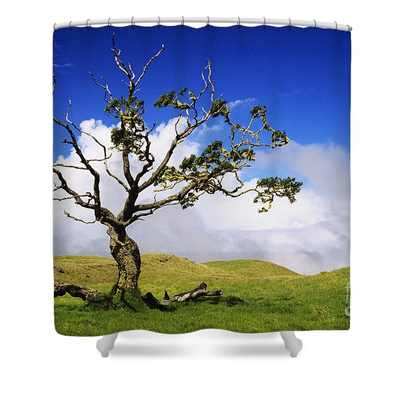 Ali O Neal Shower Curtain featuring the photograph Hawaii Koa Tree by Ali ONeal - Printscapes