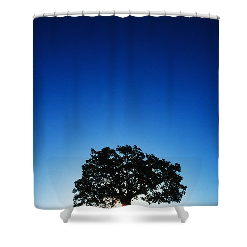 Alone Shower Curtain featuring the photograph Hawaii Koa Tree by Carl Shaneff - Printscapes