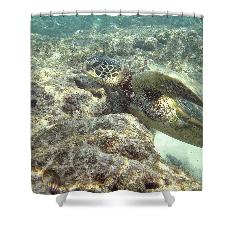 Big Shower Curtain featuring the photograph Hawaiian Green Turtle by Michael Peychich
