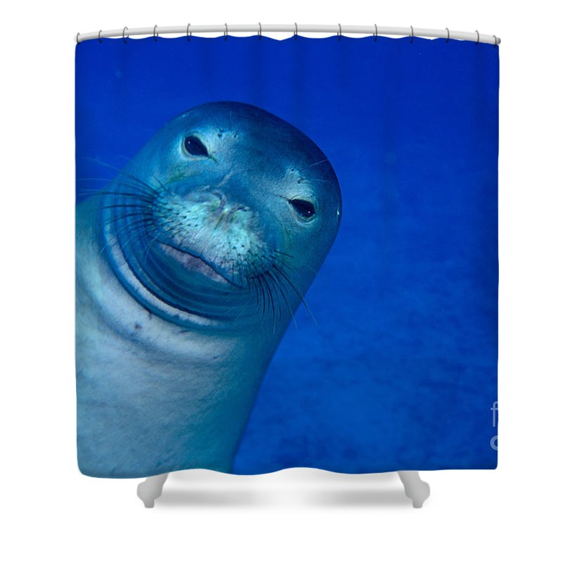Animal Art Shower Curtain featuring the photograph Hawaiian Monk Seal by Ed Robinson - Printscapes