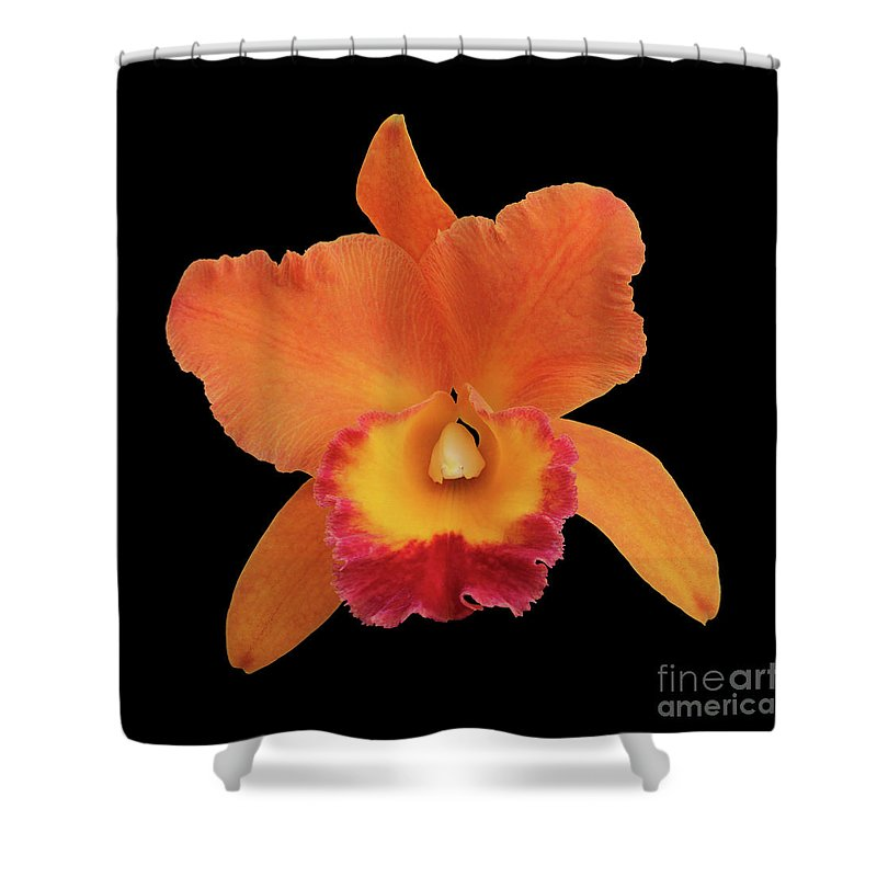 Potinara Hawaiian Thrill Paradise Shower Curtain featuring the photograph Potinara Hawaiian Thrill, Paradise by Judy Whitton