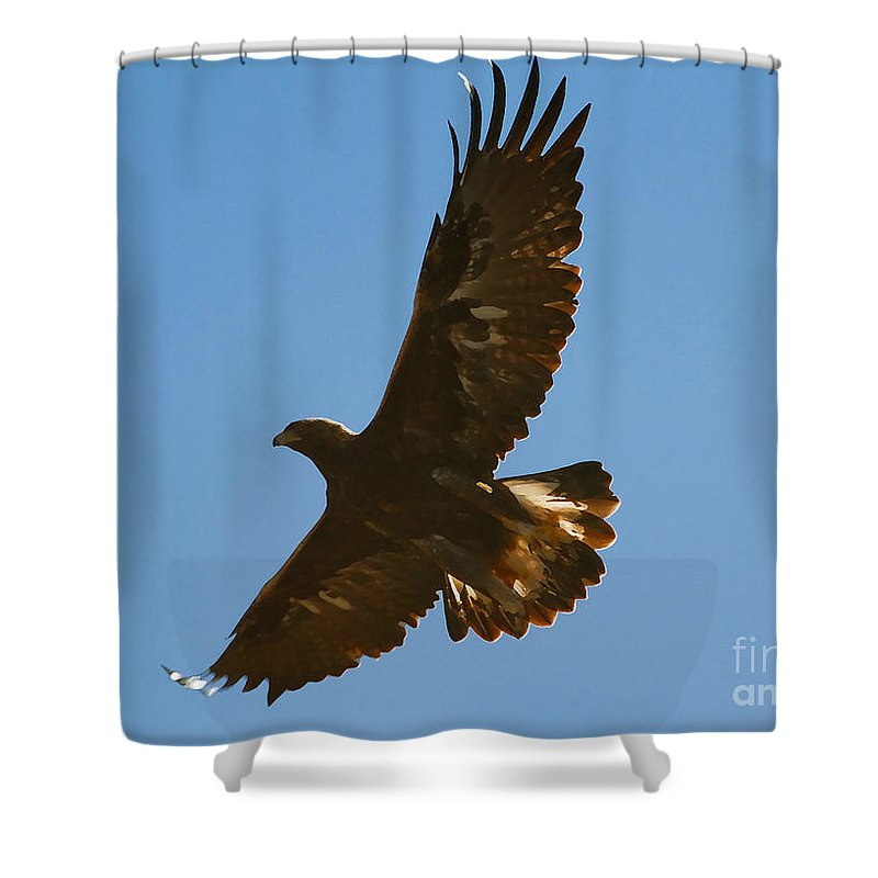Hawk Shower Curtain featuring the photograph Hawk In Flight by David Lee Thompson