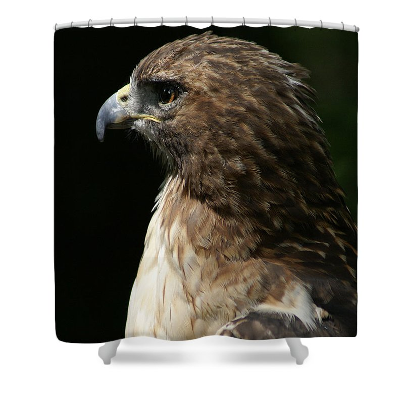 Hawk Shower Curtain featuring the photograph Hawk Portrait by Heather Coen