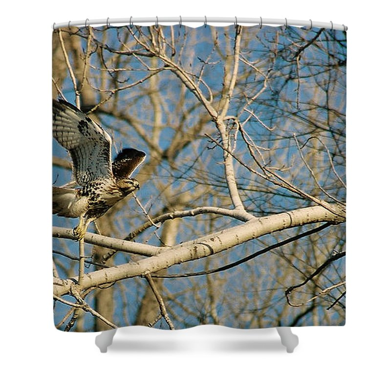 Hawk Shower Curtain featuring the photograph Hawk by Steve Karol
