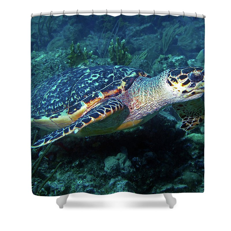 Hawksbill Sea Turtle Shower Curtain featuring the photograph Hawksbill Sea Turtle 3 by Pauline Walsh Jacobson