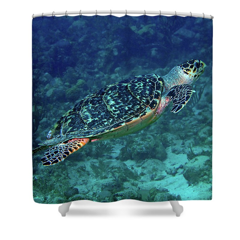 Hawksbill Sea Turtle Shower Curtain featuring the photograph Hawksbill Sea Turtle 5 by Pauline Walsh Jacobson