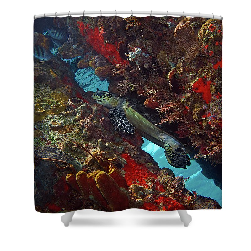 Hawksbill Sea Turtle Shower Curtain featuring the photograph Hawksbill Sea Turtle 9 by Pauline Walsh Jacobson