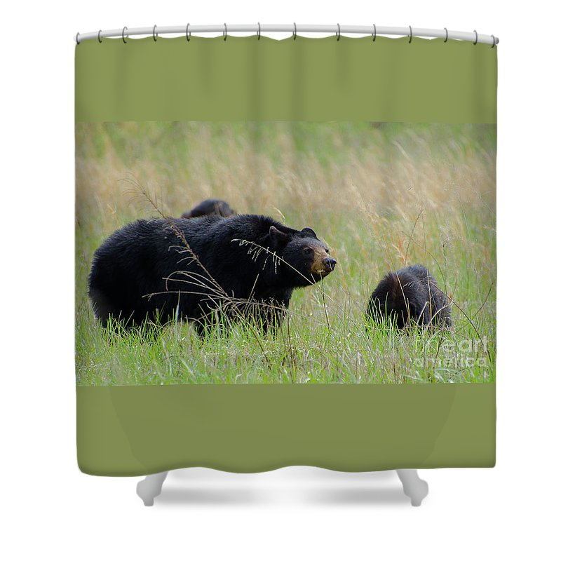 Cades Cove Shower Curtain featuring the photograph Hazel And The Wild Bunch by Brenda Gilbert