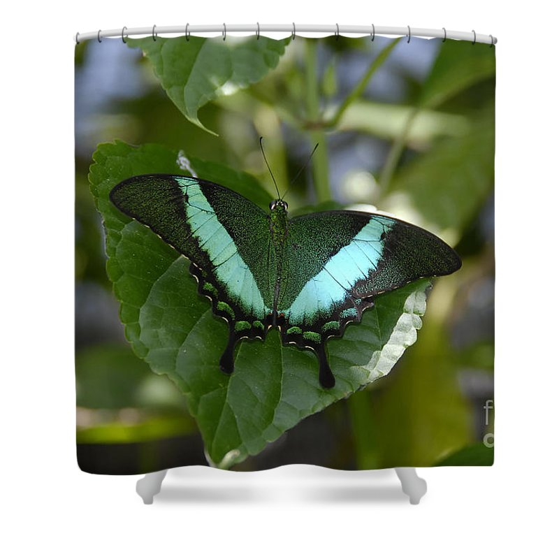 Butterfly Shower Curtain featuring the photograph Heart Leaf Butterfly by David Lee Thompson
