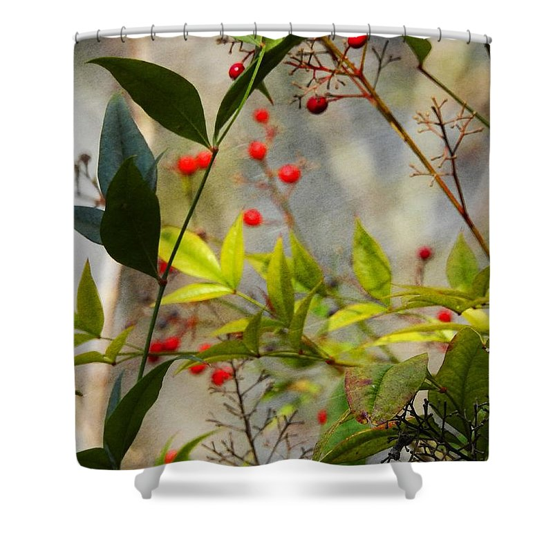 Heavenly Bamboo Shower Curtain featuring the photograph Heavenly Bamboo by Sandra Peery