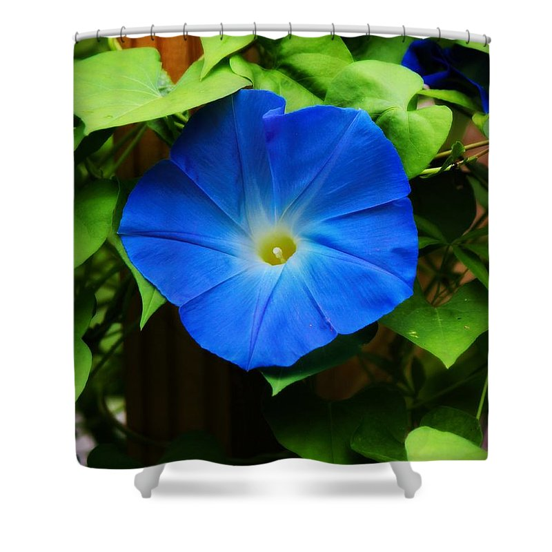 Morning Glory Shower Curtain featuring the photograph Heavenly Blue by Tina LeCour