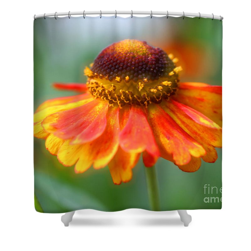 Flower Shower Curtain featuring the photograph Heavenly Zinnia by Smilin Eyes Treasures