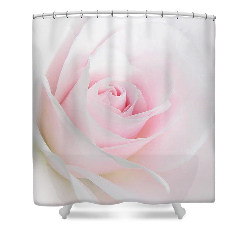 Heavens light pink rose flower shower curtain for sale by jennie rose shower curtain featuring the photograph heavens light pink rose flower by jennie marie schell mightylinksfo