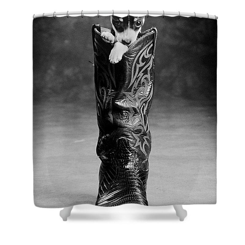 Chiwawa Shower Curtain featuring the photograph Heeler by Jill Reger