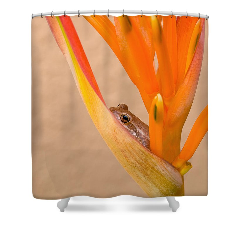 Frog Shower Curtain featuring the photograph Heliconia And Frog by Steven Sparks