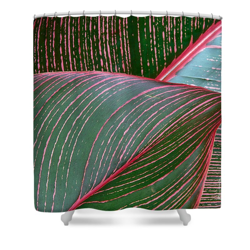 Closeup Shower Curtain featuring the photograph Heliconia Leaf by Peter French - Printscapes