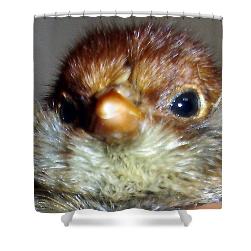 Chick Shower Curtain featuring the photograph Hello Chick by Susan Baker