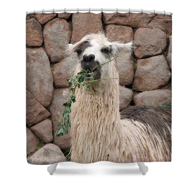 Animal Shower Curtain featuring the photograph Hello by Sandra Bourret