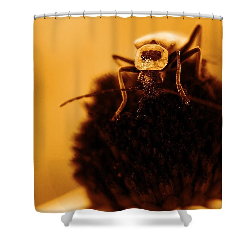 Black Eyed Susan Shower Curtain featuring the photograph Hello There by Angela Rath