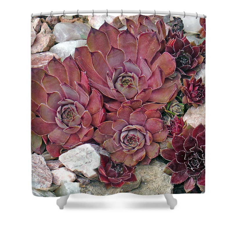 Landscape Shower Curtain featuring the photograph Hens And Chickens by Steve Karol