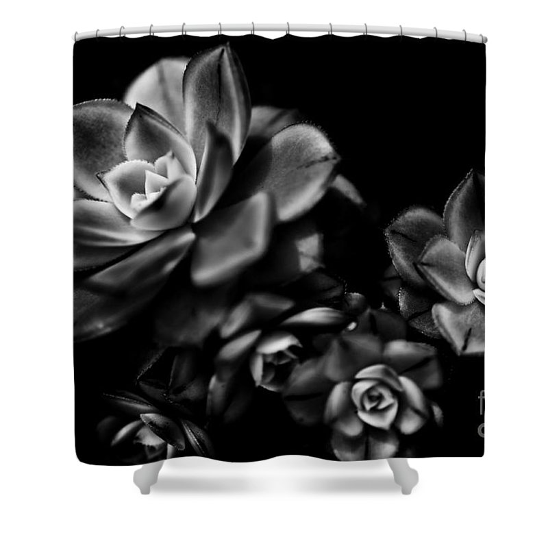 Botanical Shower Curtain featuring the photograph Hens And Chicks 2 by Venetta Archer
