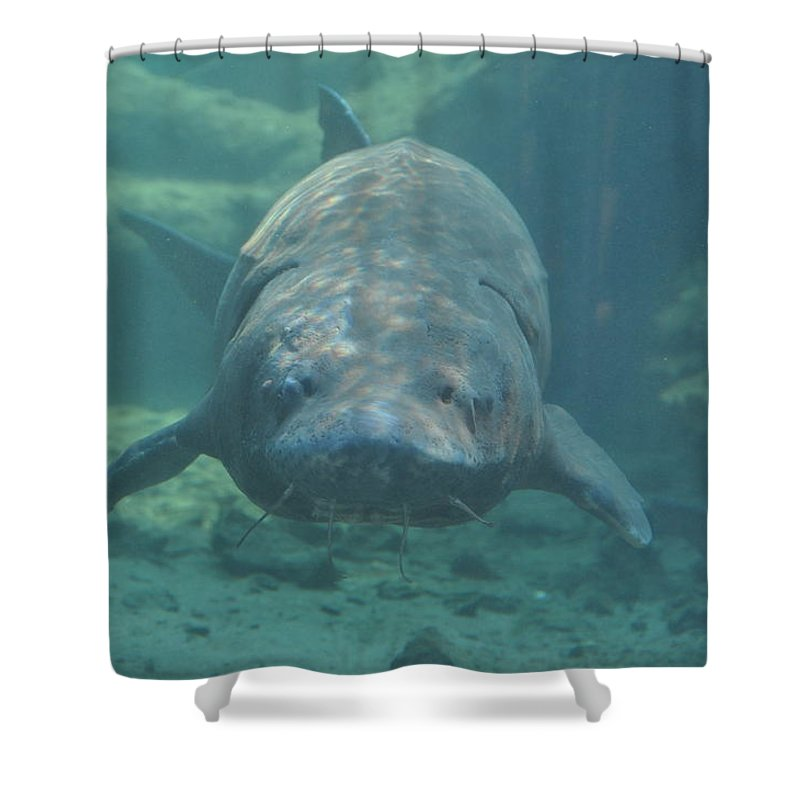Fish Shower Curtain featuring the photograph Herman The Sturgeon by Rich Bodane