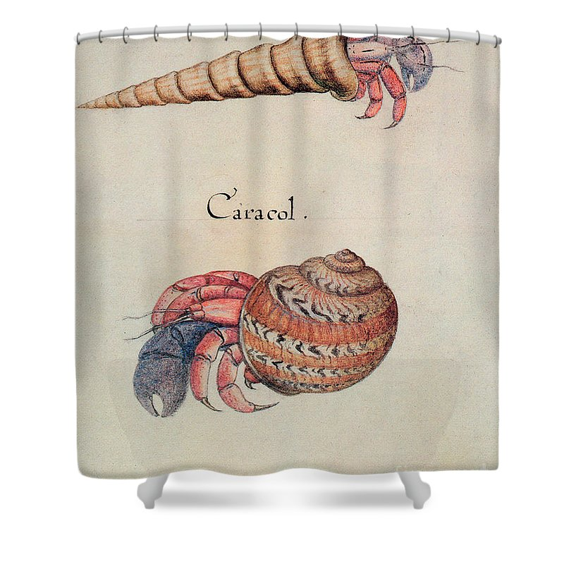 Hermit Crab Shower Curtain Featuring The Painting By John White
