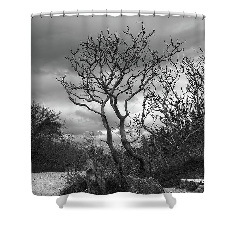 Tree Shower Curtain featuring the photograph Hermit Island Tree 0912 by Guy Whiteley
