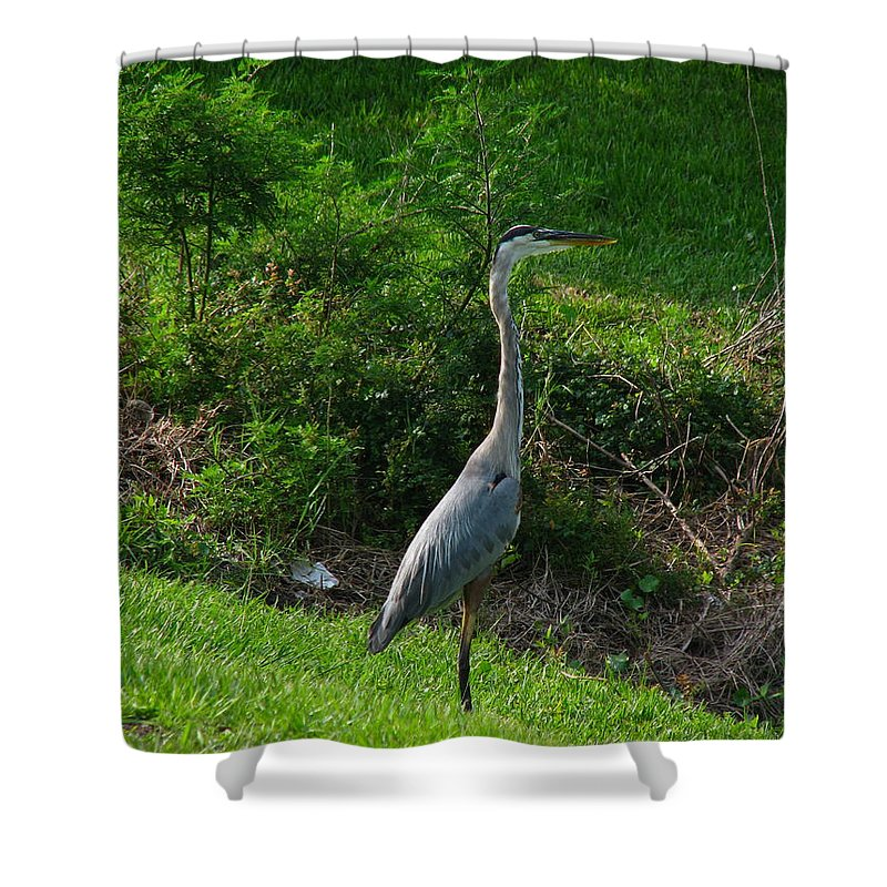 Patzer Shower Curtain featuring the photograph Heron Blue by Greg Patzer