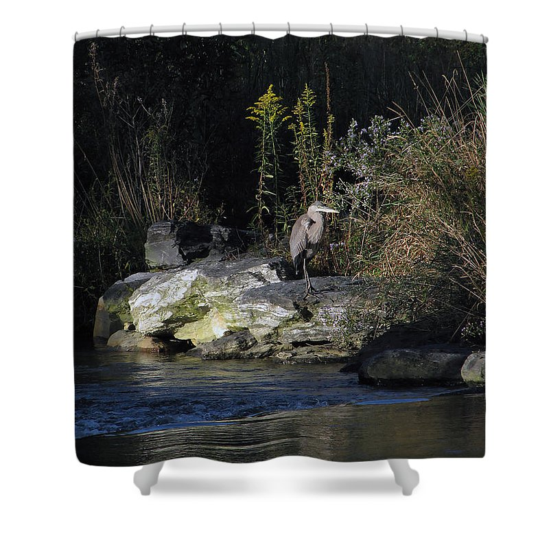 Heron Shower Curtain featuring the photograph Heron By A Stream by Gary Adkins