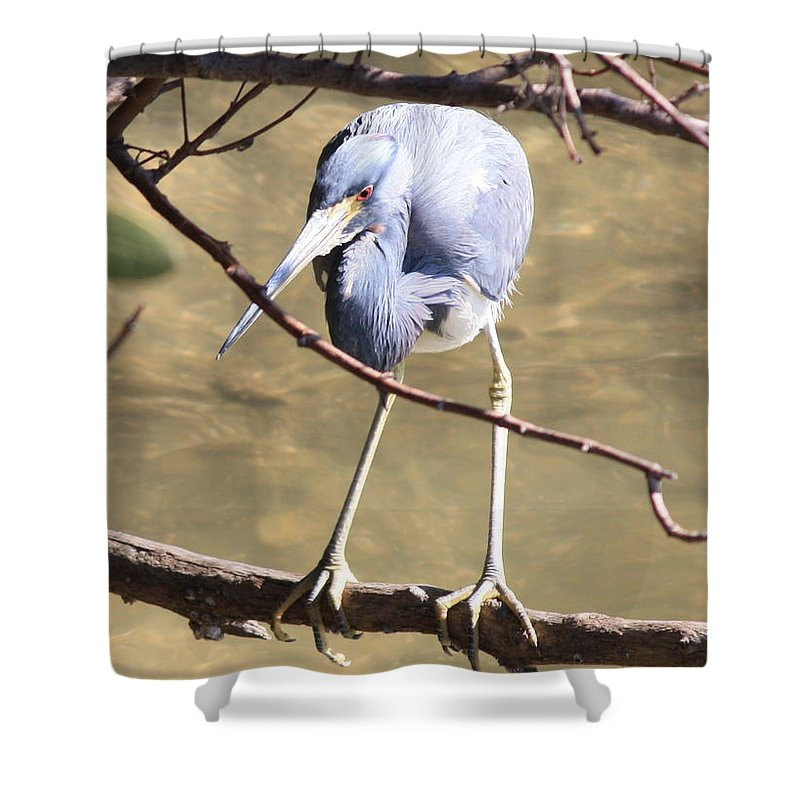 Tricolored Heron Shower Curtain featuring the photograph Heron On Branch by Carol Groenen