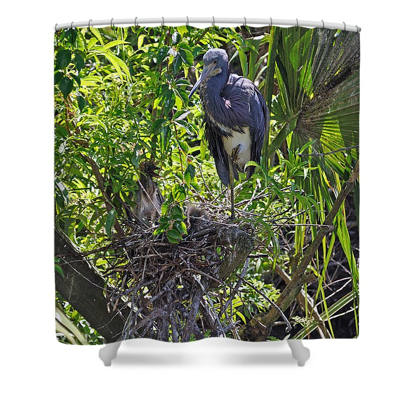 Heron Shower Curtain featuring the photograph Heron With Chick In Nest by Kenneth Albin