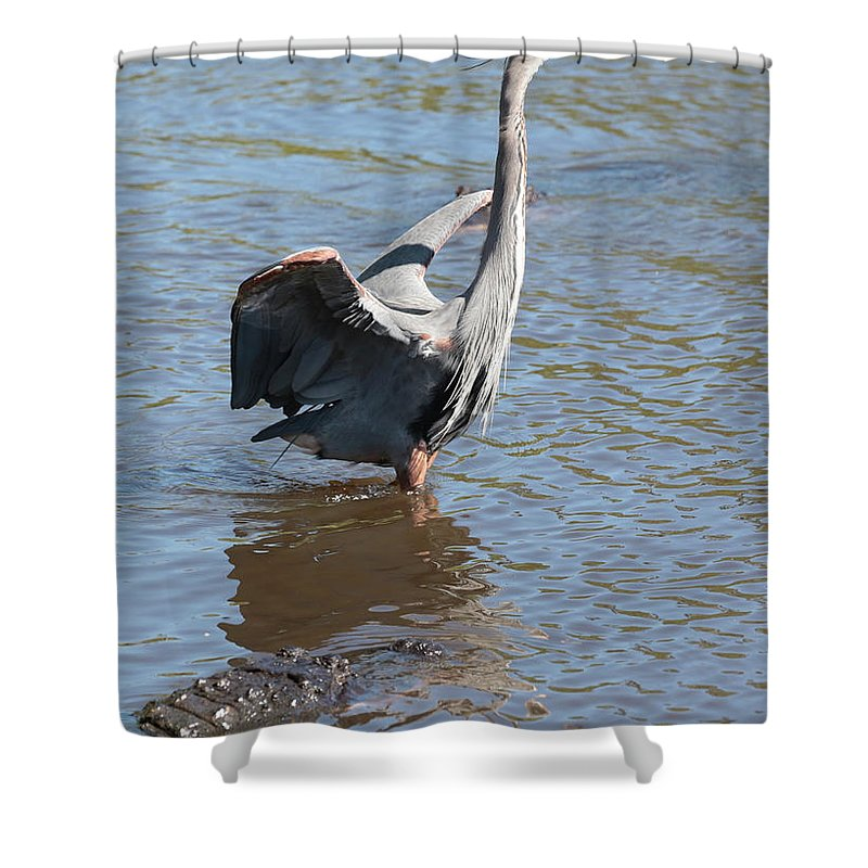 Gator Shower Curtain featuring the photograph Heron With Gator by Carol Groenen