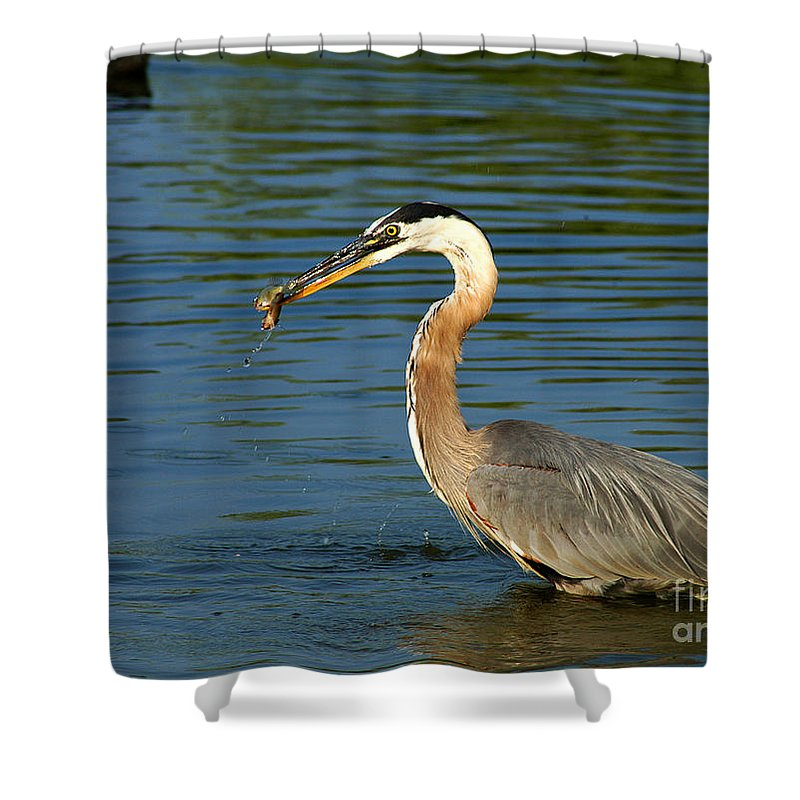 Clay Shower Curtain featuring the photograph Herons Catch by Clayton Bruster
