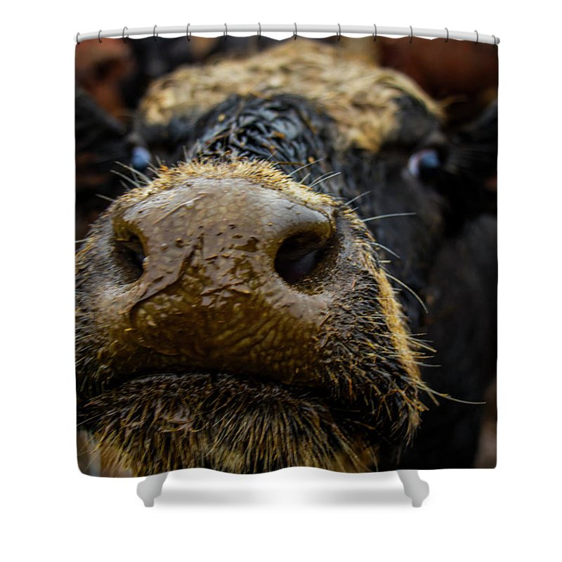 Cow Cattle Macro Landscape Animal Farm Outdoors Cows Closeup Mud Fence Ears Face Eyes Nose Smiling Smile Shower Curtain featuring the photograph Hey.. by Tommy Schuch