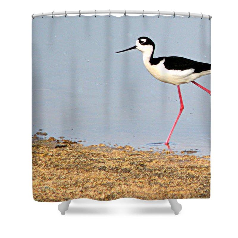 Birds Shower Curtain featuring the photograph Hi-stepper by AJ Schibig