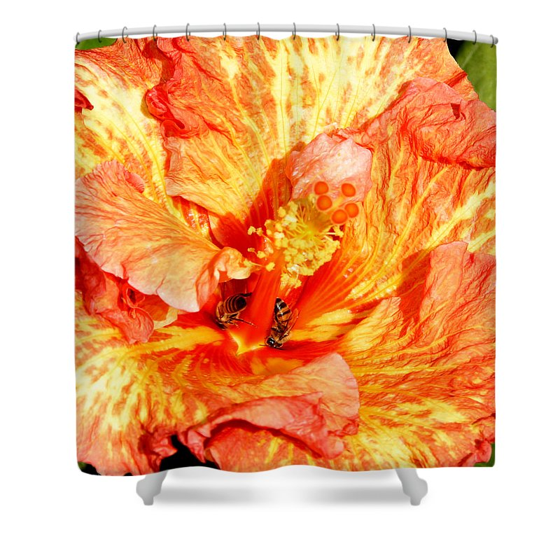 Bees Shower Curtain featuring the photograph Hibiscus And Bees by Anthony Jones