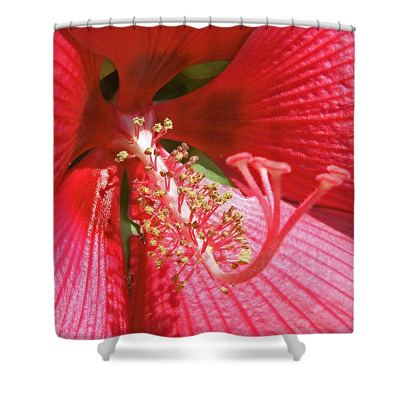 Flowers Shower Curtain featuring the photograph Hibiscus by Donna Shahan