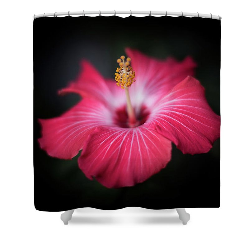 Hibiscus Shower Curtain featuring the photograph Hibiscus Flower by Jakub Sisak
