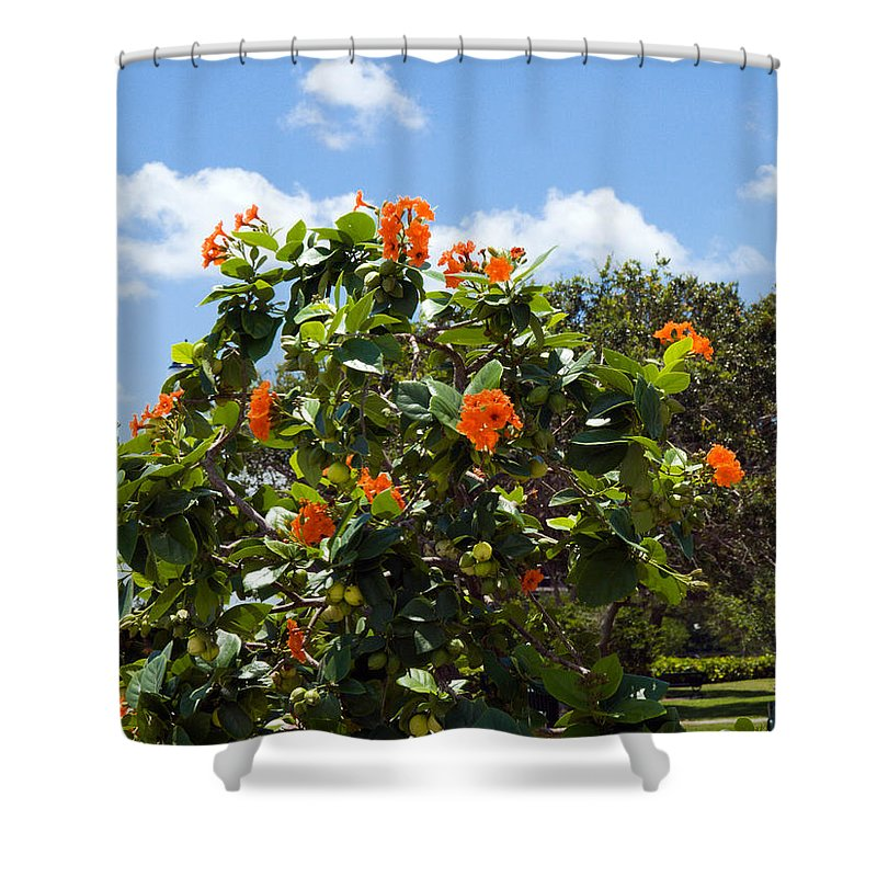 Hibiscus; Rosasinensis; Rosa; Sinensis; Rosa-sinensis; Tree; Bush; Shrub; Plant; Flower; Flowers; Fl Shower Curtain featuring the photograph Hibiscus Rosasinensis With Fruit by Allan Hughes