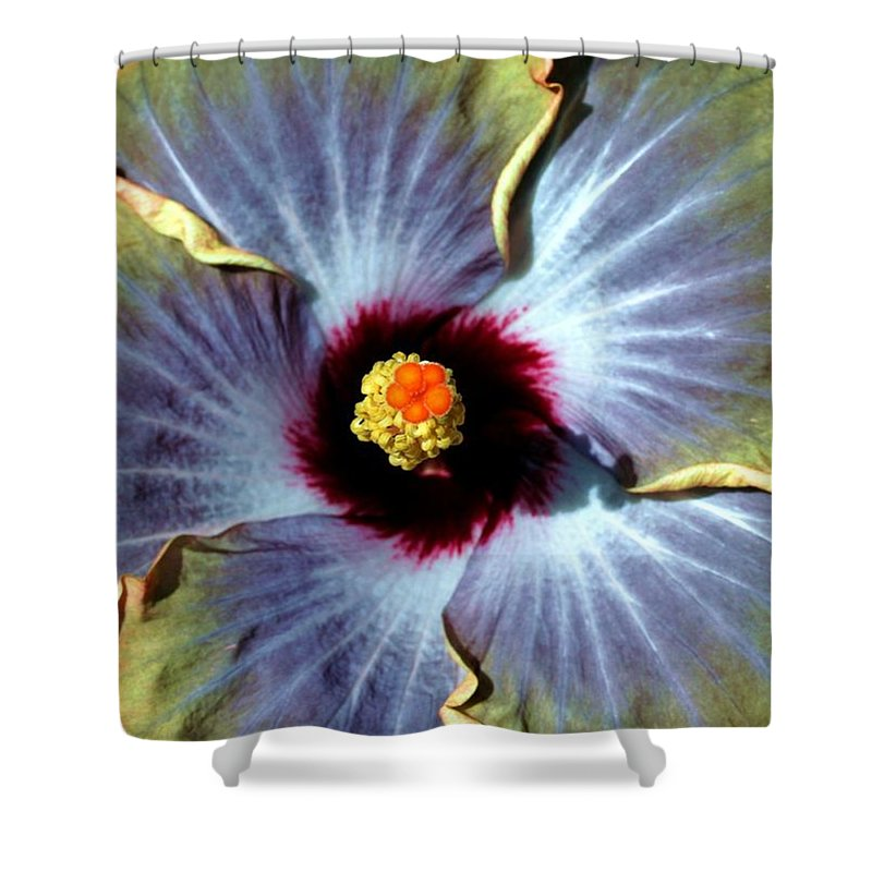 Flower Shower Curtain featuring the photograph Hieroglyphics Of Nature by Mitch Cat