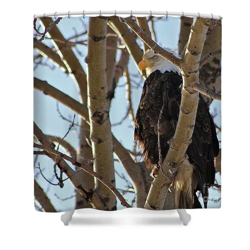 Eagle Shower Curtain featuring the photograph High Look Out by Rick Monyahan