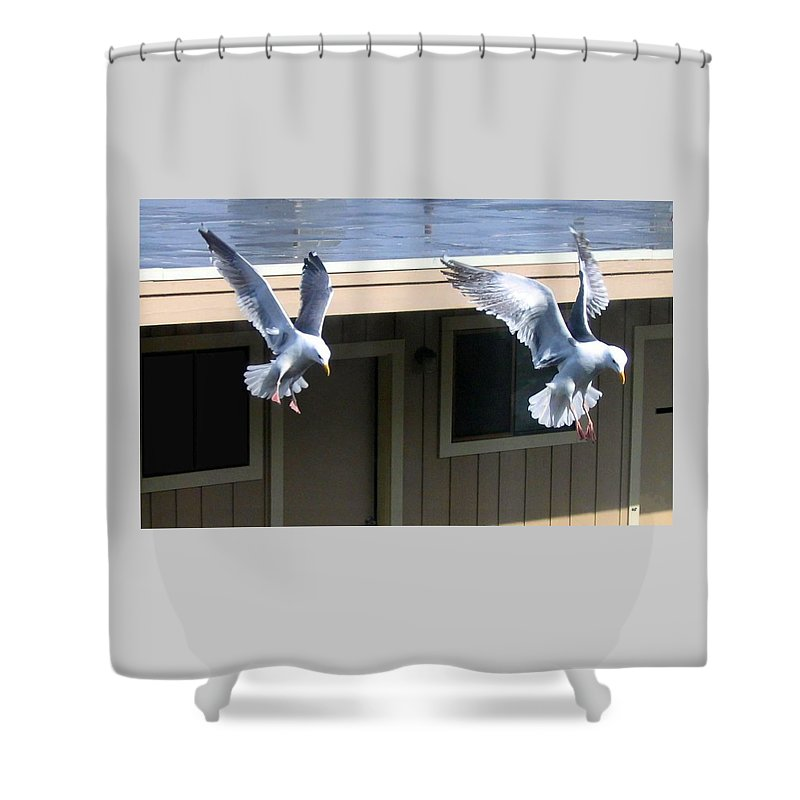 Seagulls Shower Curtain featuring the photograph High Spirits by Will Borden
